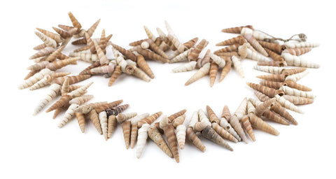 West African Porcupine Shell Beads (Brown) - The Bead Chest