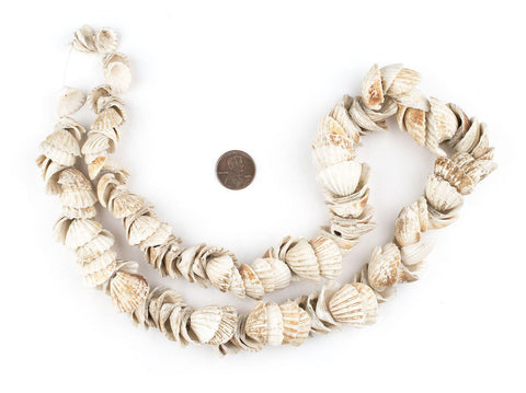 West African Sea Shell Beads - The Bead Chest
