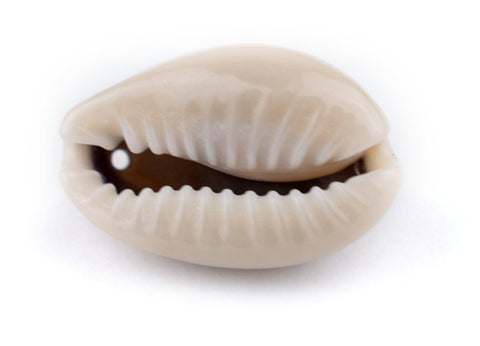 Drilled Cowrie Shells (Medium) - The Bead Chest