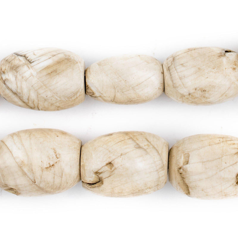 Oval Naga Conch Shell Beads (24x16mm) - The Bead Chest