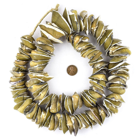 Image of Jumbo Brown Ocean Shell Beads - The Bead Chest