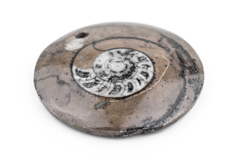 Image of Ammonite Moroccan Fossil Pendant - The Bead Chest