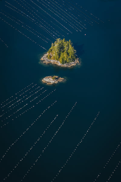 Aerial View of Oyster farm