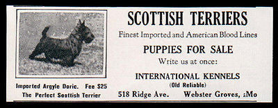 Scottish Terriers Imported Stud Argyle Doric 1927 AD Webster Groves MO
