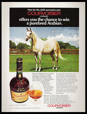 Horse Arabian Horse Courvoisier Cognac Brandy Photo Shaitaan 1977 Contest Ad - Paperink Graphics