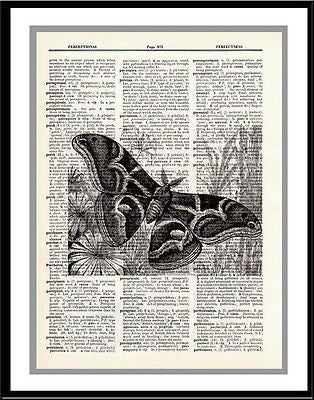 Moth Butterfly Family Insect Dictionary Art Print  insect001