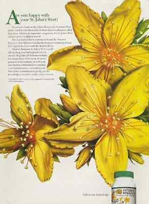 St. John's Wort Blossoms 1998 Kitchen Bath Photo AD