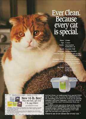 Gizmo Scottish Fold Cat 1993 Photo Coupon Ad