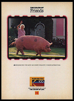Huge Pink Pig Strolls with Granny 1986 Photo Print Ad Kodak Film Humerous