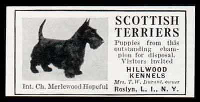 Scottish Terriers 1935 AD Int Ch Merlewood Hopeful Puppies Hillwood Roslyn LI NY