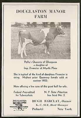 Antique Cow AD Queenie Highest Auction Guernsey Female 1934 Photo Illustrated AD - Paperink Graphics