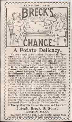 Potato Ad Cupid's Choice Breck's Chance Potato 1895 Garden Vegetable Plant AD