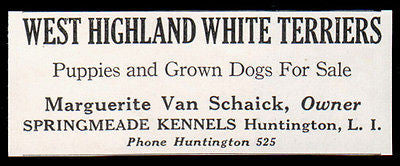 West Highland White Terrier 1933 AD Dog Van Schaick Springmeade Kennels LI NY