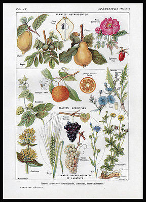 Botanical French Print Apêritives Astringentes 1921 Larousse Plate IV - Paperink Graphics
