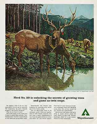 Elk Herd Weyerhaeuser Tree Farm Vintage 1967 Ad Trees Animals Environment Art