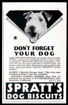 Airdale Terrier Spratt's Dog Biscuits 1931 Photo AD - Paperink Graphics