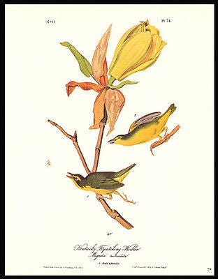 1979 Audobon Bird Print Kentucky Flycatching Warbler Home Decor