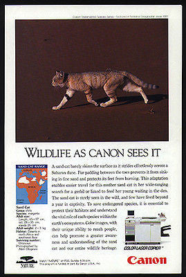 Sand Cat Rare Sahara Cat Range Map 1993 Photo Ad Canon Laser Copier