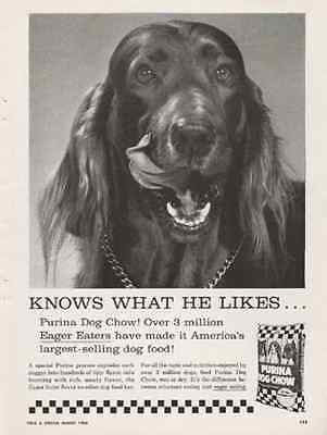 Irish Setter Dog 1960 AD Purina Dog Chow - Paperink Graphics