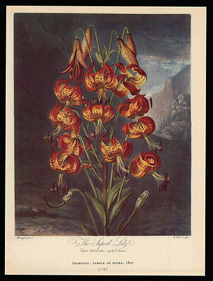 Antique Botanical Print 1938 Superb Lily Dunthorne Flower Fruit - Paperink Graphics