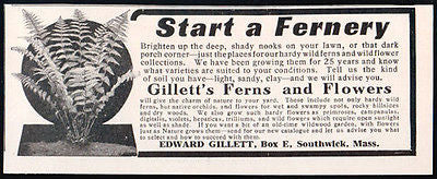 Ferns Flowers Start a Fernery Gillett's Ferns and Flowers 1913 AD