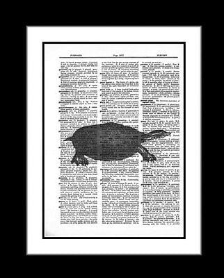 Turtle Print Soft Shell Turtle Dictionary Art Print Reptile  nature003