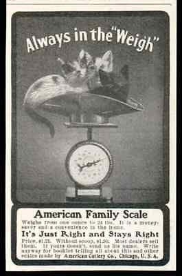 Kittens Kitty Cats Weigh In American Family Scale 1905 Photo AD Cats Wall Art