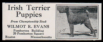 Irish Terrier Dogs Puppies 1927 AD Wilmot Evans Boston MA - Paperink Graphics