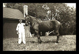 Horse Proud Guy Photo Handsome Field B/W Image Thin Paper - Paperink Graphics