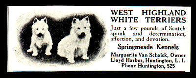 1927 Dog AD West Highland White Terrier Springmeade Kennels LI NY - Paperink Graphics