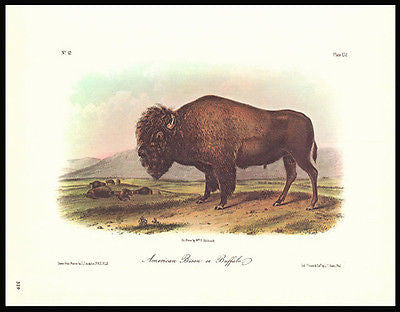American Bison or Buffalo Audubon 1979 Animal Wildlife Print Home Decor Wall Art - Paperink Graphics