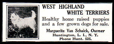 West Highland White Terrier 1927 Dog AD Marguerite Van Schaick Huntington LI NY