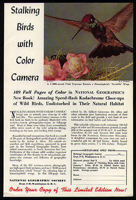 Hummingbird Visible Wings 1952 Photo Ad National Geographic Birds