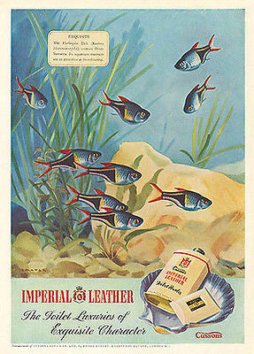Harlequin Fish Cussons Powder 1950 Chater Print Grapic Arts Illustration AD