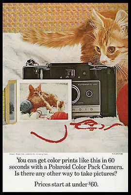 Kitty Cat Enchanting Portrait Polaroid 100 Color Camera 1966 Photo Ad