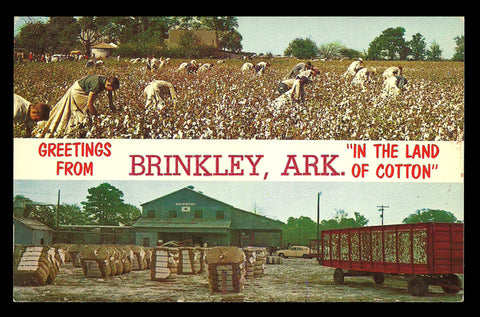 Land of Cotton Postcard Arkansas Greetings From Brinkley Two Views Pickers Bales  AR PC
