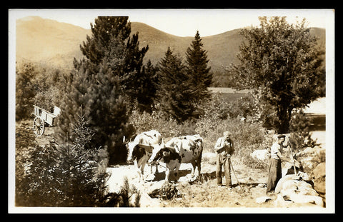 Oxen Contoocook Real Photo Postcard 1930-50 New Hampshire Stone Wall Repairs NH RPPC