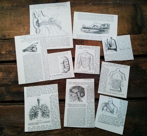 Anatomy Medical Paper Ephemera 1893 Paper Cuts Art Supplies Lot 10 pieces for Mixed Media Collage Craft Artist Supplies ANATOMY - Paperink Graphics