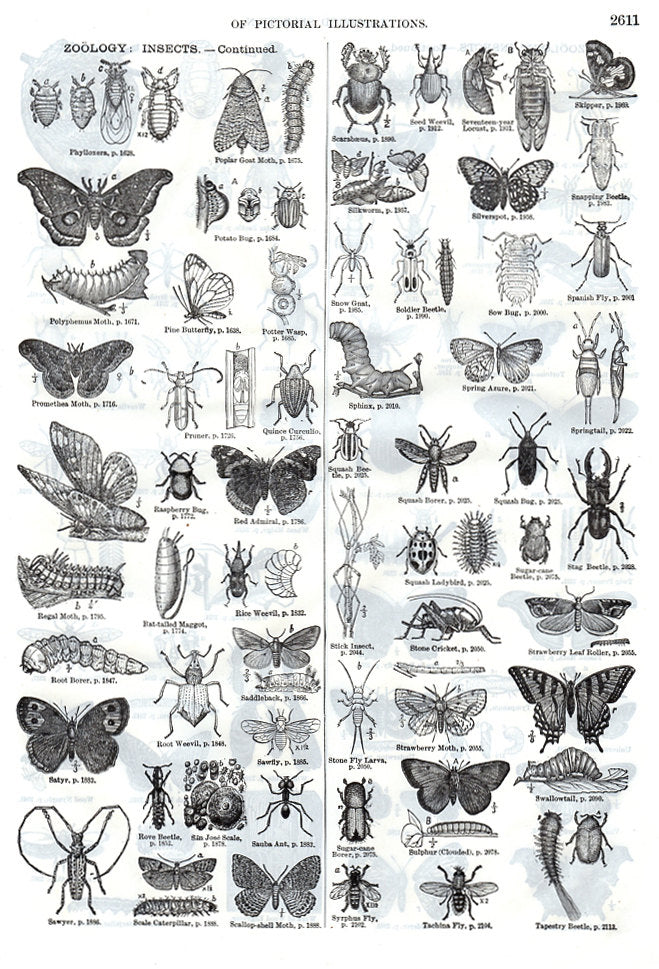 Antique Vintage Insects Print Wall Art Collectibles Illustration 1914 Bugs Beetles Moths Creepy Crawly Wings Ready to Frame