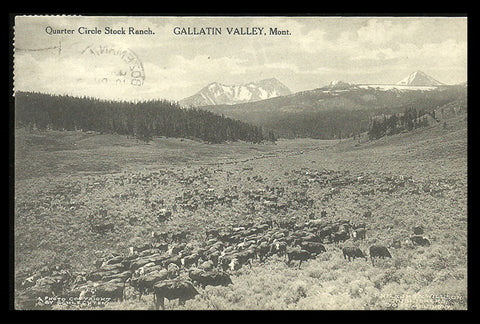 Gallatin Valley MT Postcard 1915 Quarter Circle Stock Ranch Cattle