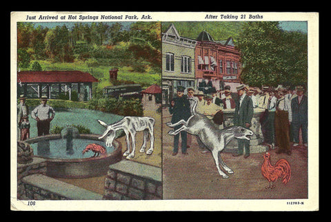 Hot Springs Postcard 1948 Arkansas Mule Rooster Take the Bath Cure