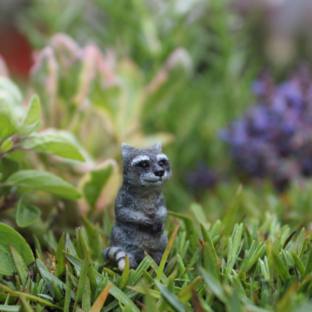 Moe the Raccoon: Fairy Garden Miniature Animal - Baby Feathers Gift Shop