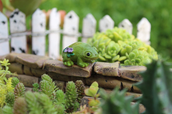 Leo the Frog Fairy Garden Animal Miniature - Baby Feathers Gift Shop