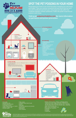 Pet Poison Awareness Infographic