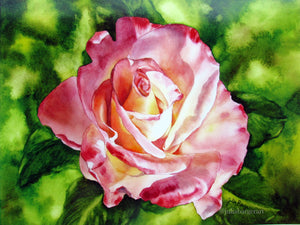 "Variegated Rose 10""x13"" high gloss print"