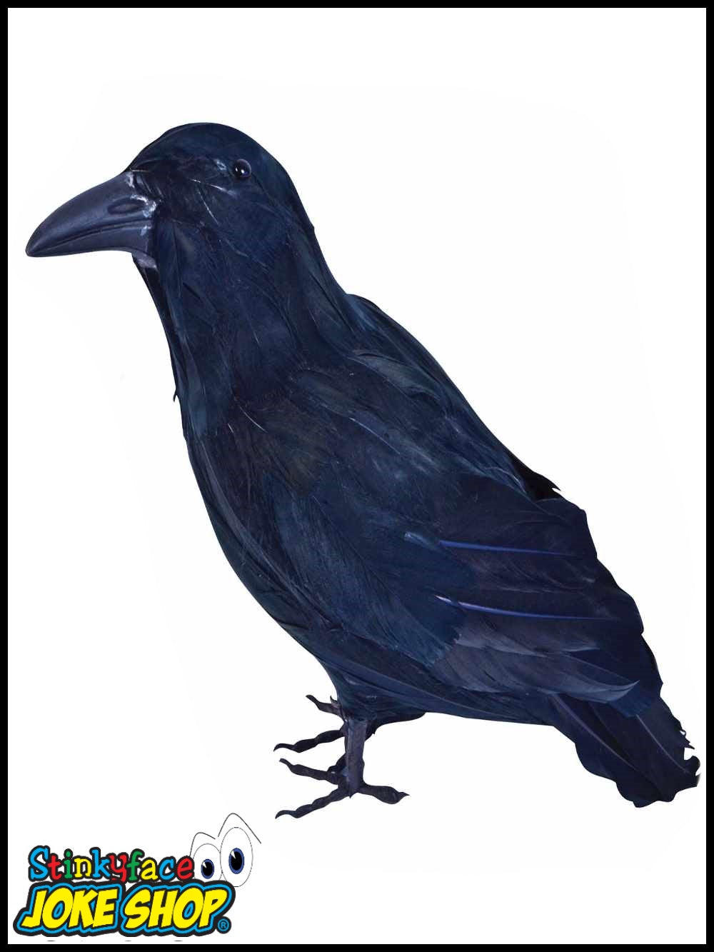 Feathered Crow Raven Bird