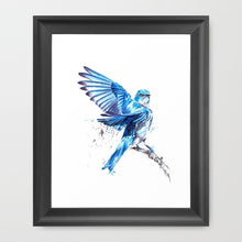 Mountain Bluebird | Print