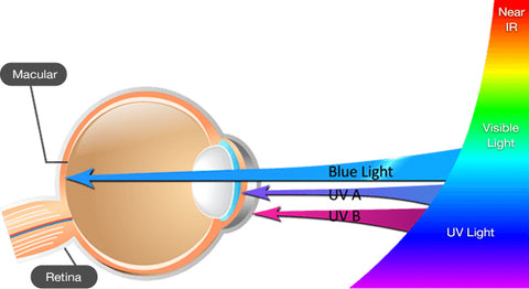 blue light macular degeneration