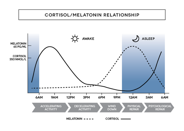 melatonin cortisol relationship
