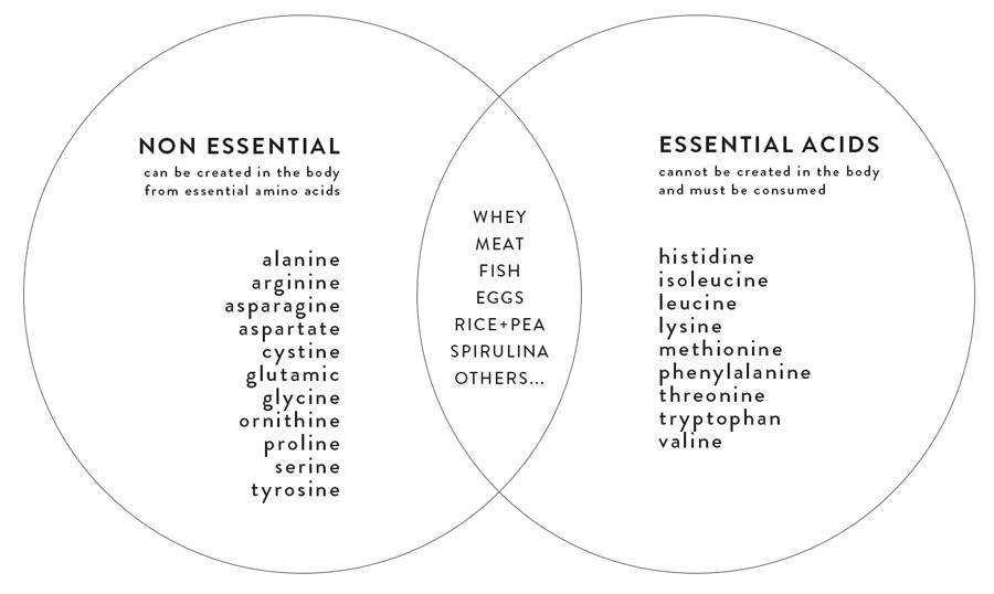 Chat: Essential and Non Essential Amino Acids
